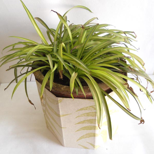 100% hemp paper given real leaves impressions planter