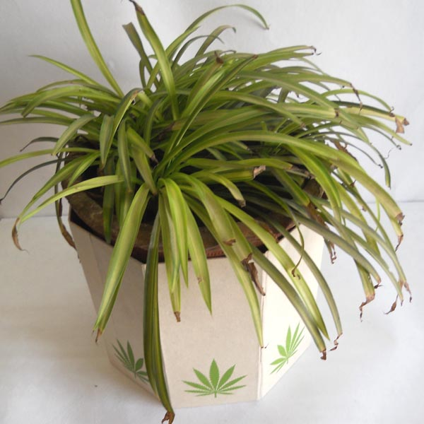 Hemp paper printed hemp leaves collapsible planter