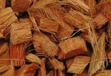 Coconut coir husk chips for growing plant