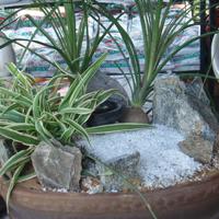 Gardening Tray
