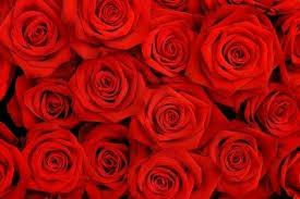 Natural Red Rose