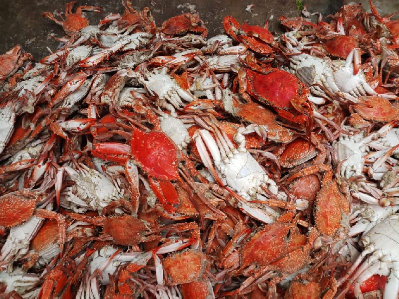 Buy Cooked blue crab from Sea Star Marine Service, Jamnagar