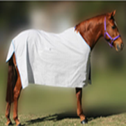 Animal Covers & Equestrian