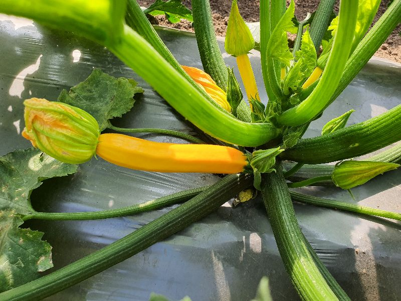 fresh exotic vegetables