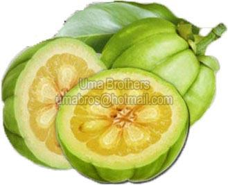 Buy Garcinia Cambogia Fruit From Uma Brothers Mumbai India Id