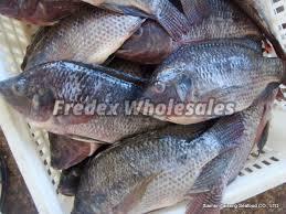 Frozen Whole Tilapia Fish