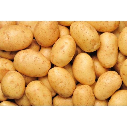Fresh Export Quality Potato