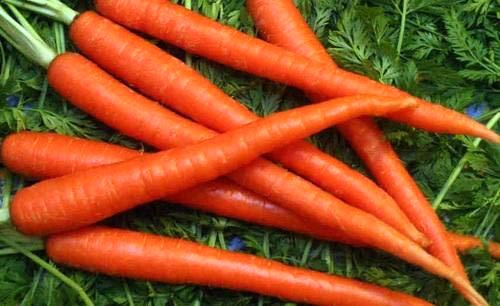 Growing Carrots from Seeds - Carrot Farming