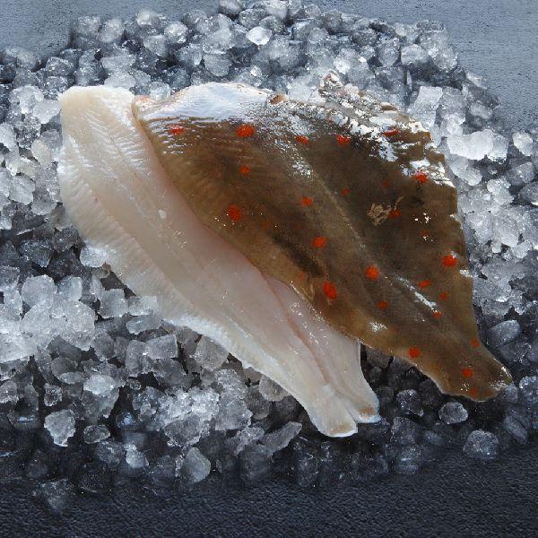 Frozen Plaice Fillet