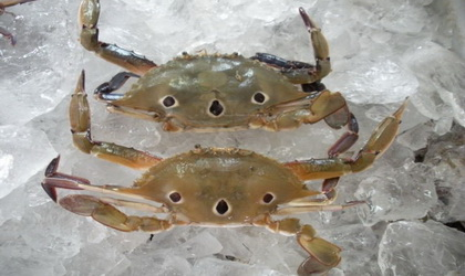 Frozen Three Spot Crab