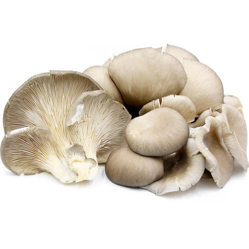 Oyster Button Mushroom