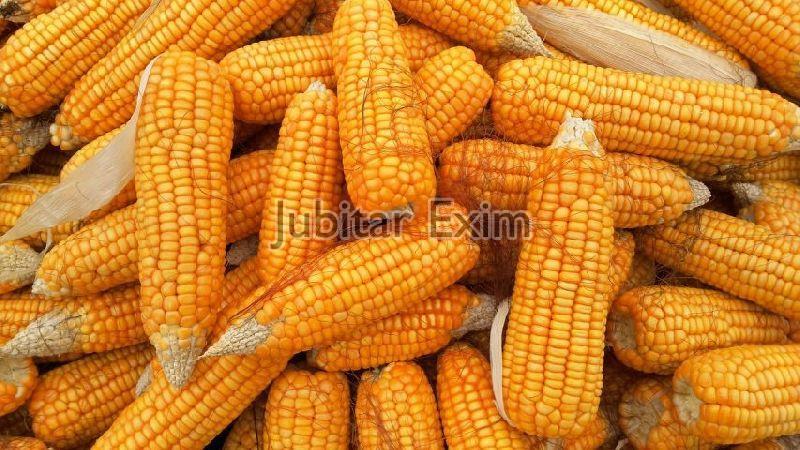 Raw Maize