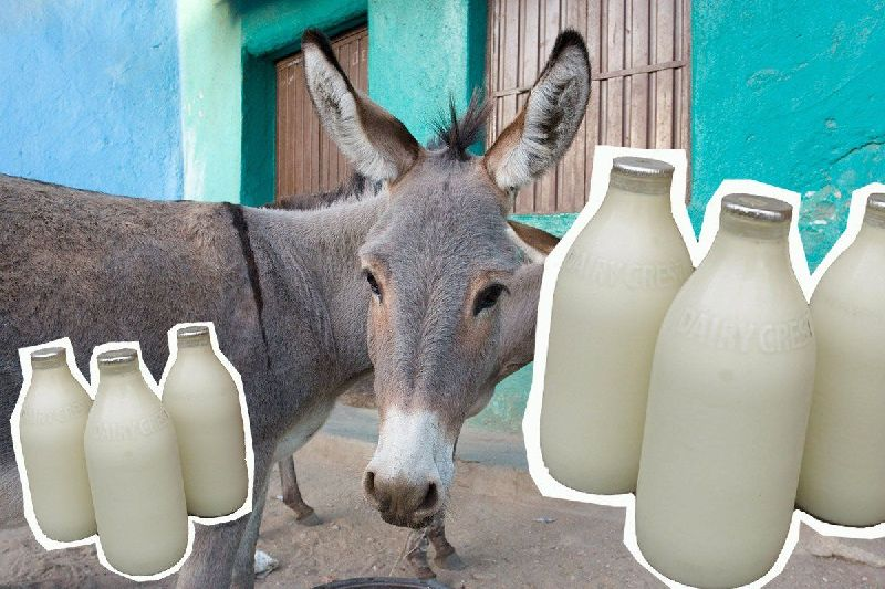 Donkey Milk (DONKY_MILK_01)