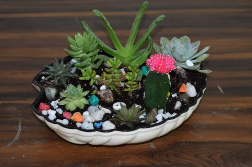 Ceramic Tray for Cactus and Succulent Plants