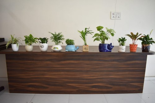 Indoor Air Purifier Plants Collection