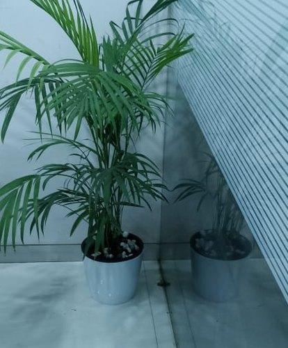 Plastic Pot for Plants