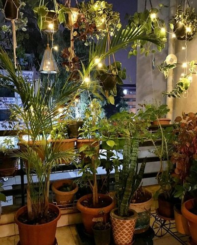 PO Green Decor - Makeover your Place with Air Purifier Indoor and Outdoor Plants