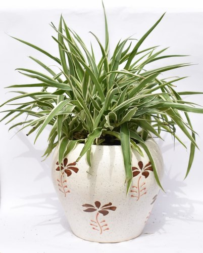 Spider Plant with Ceramic Plant