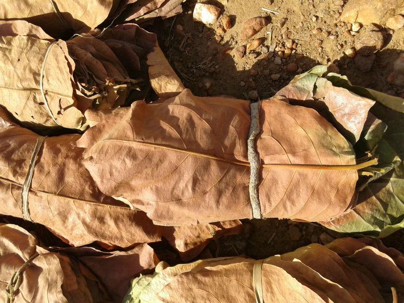 Dried Tendu Leaves