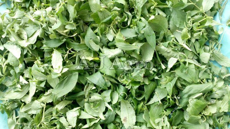 Green Stevia Leaves