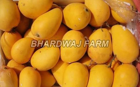 Pure Kesar Mango
