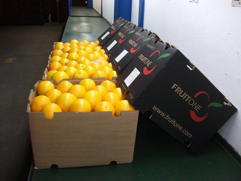 Fresh Navel Valencia oranges (87062)