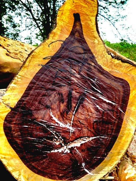 Katalox (Swartzia Cubensis) Wood Logs