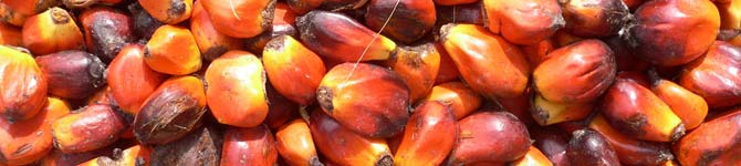 Palm Nuts