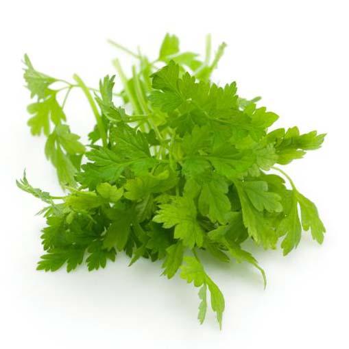 Chervil Leaf