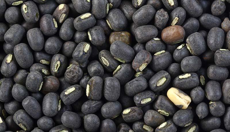 Urad Seeds