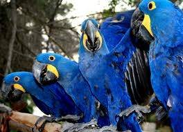 Buy Macaw Parrots,African Grey Parrots Hand Reared Parrots and