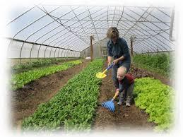 Farm House Development Service (SCS0522)
