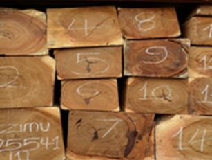 Daniella Oliveri Wood Lumbers