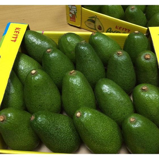 Fresh Avocados (Avocados)