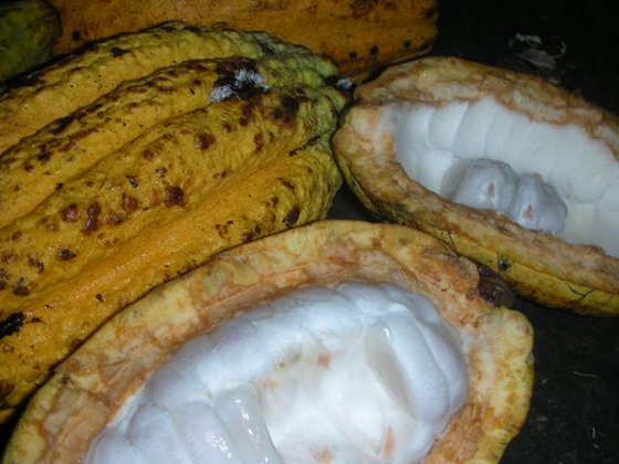 Fresh Cocoa Seeds