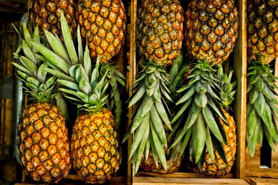 Sweet Pineapples (green)