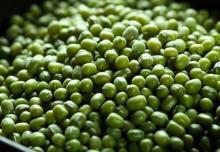 High Quality Green Mung Beans (green mung beans)