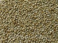 Millet Seeds (mille)