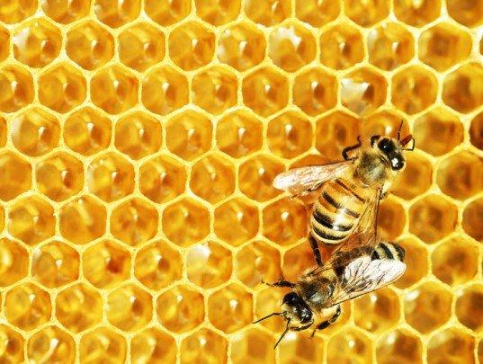 Nature Bee Honey