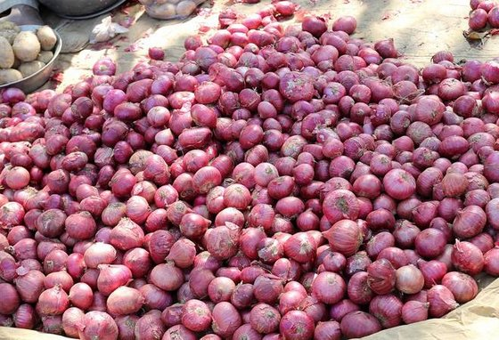 Fresh Red Onions (Quality Fresh Red, Yellow and White Onio)