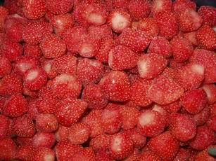 Strawberry Fresh Berries