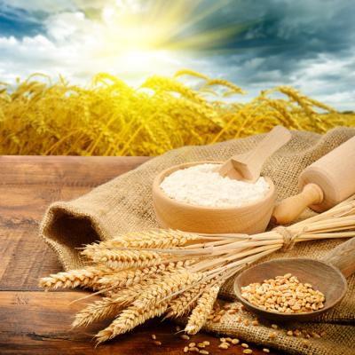 Non GMO Wheat Seeds
