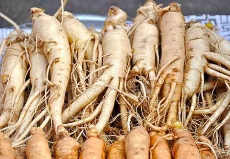 Ashwagandha Roots