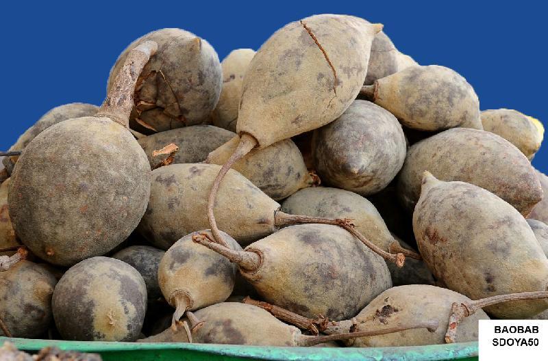 Fresh Baobab (SDOYA50)