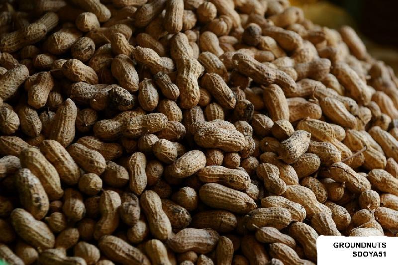 Groundnuts (SDOYA51)