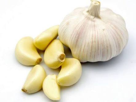 Garlic Manufacturer in Gujarat India by Om Enterprise & Marine