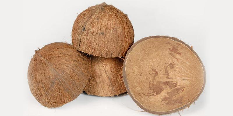 Coconut Shell Manufacturer In Ernakulam Kerala India By Kairali