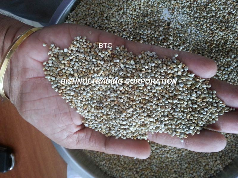 Millet for Human consumption