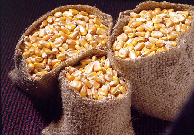 Yellow Maize Cattle Feed Manufacturer in AURANGABAD
