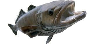 Fresh and frozen Chilean Sea Bass